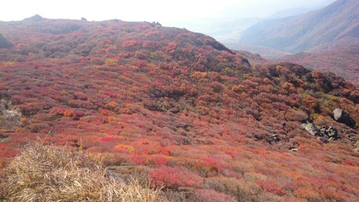 くじゅう連山~大船山の紅葉_e0262382_20202987.jpg