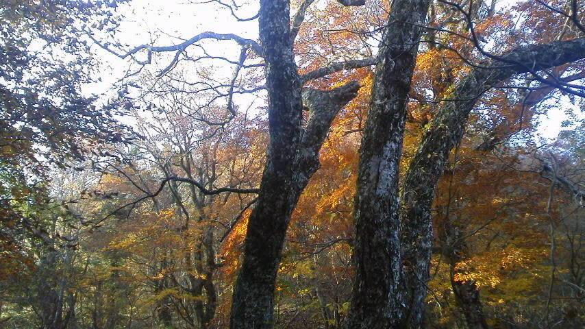 10月23日・気か付けば、紅葉は見ノ越周辺にかけ降りていました。朝の気温か6℃近くあって、ほんまに暖かく過ごしやすいこの秋です。_c0089831_1545890.jpg