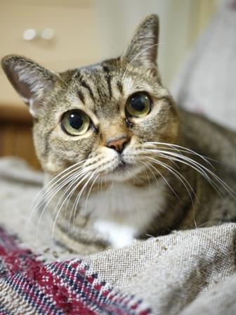 猫のお留守番 ヘキサちゃんヘプタちゃん編。_a0143140_2312395.jpg