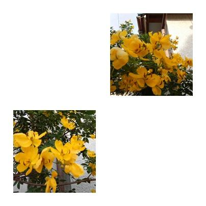 f0031546_2055202.jpg