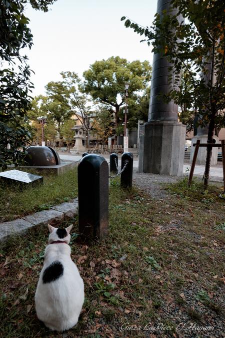 猫のいる風景 富岡八幡宮の黒白ちゃん_b0133053_055370.jpg