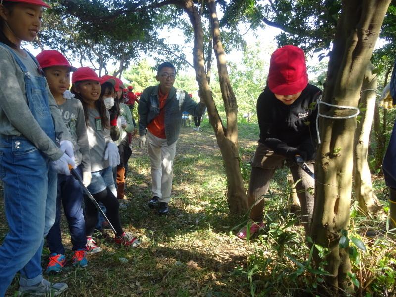 東光小学校4年生遠足「里山体験」サポート in うみべの森_c0108460_21205521.jpg