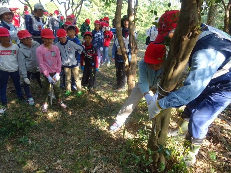 東光小学校4年生遠足「里山体験」サポート in うみべの森_c0108460_21255925.jpg