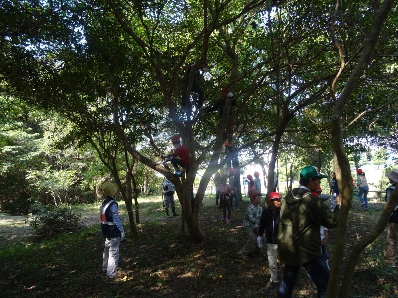 東光小学校4年生遠足「里山体験」サポート in うみべの森_c0108460_21372385.jpg