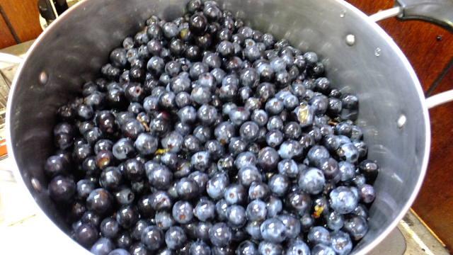 採れたての山ブドウの粒を鍋に入れて、沸騰しない程度の火加減で、実をつぶしていくだけ!