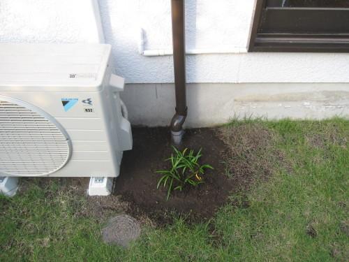 お庭の工事やっと終了です。_e0350927_16371171.jpg