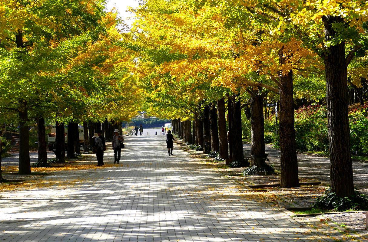 福島市 秋のあづま総合運動公園_d0106628_07093538.jpg