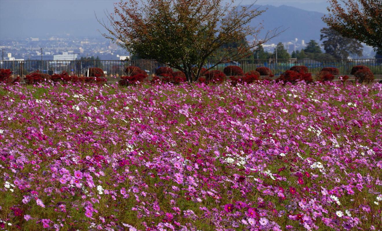 福島市 秋のあづま総合運動公園_d0106628_07095344.jpg