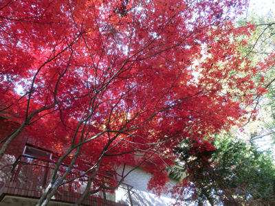 無藝荘と小津の散歩道_f0019247_2372018.jpg