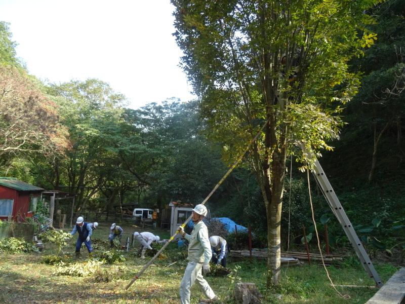 ケヤキの大剪定 in 孝子の森     by     (TATE-misaki)_c0108460_02455254.jpg