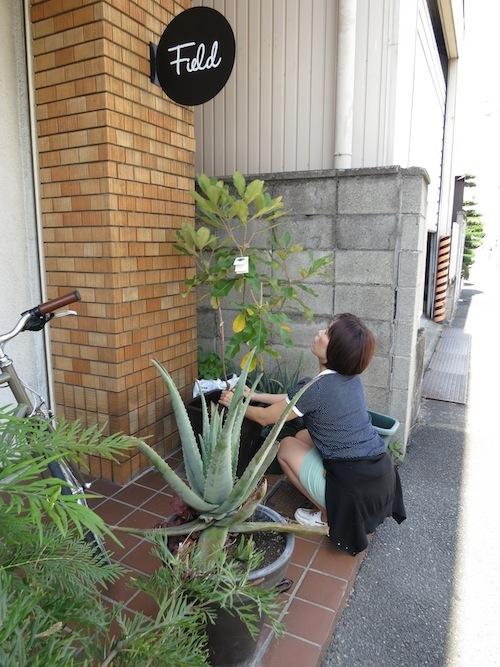 新しい植物_f0324766_13301300.jpg