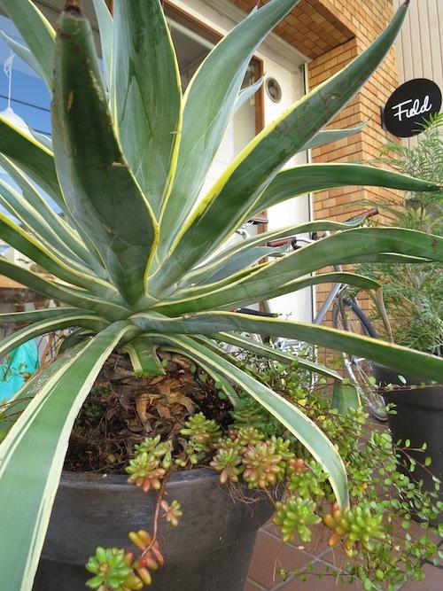 新しい植物_f0324766_13301319.jpg