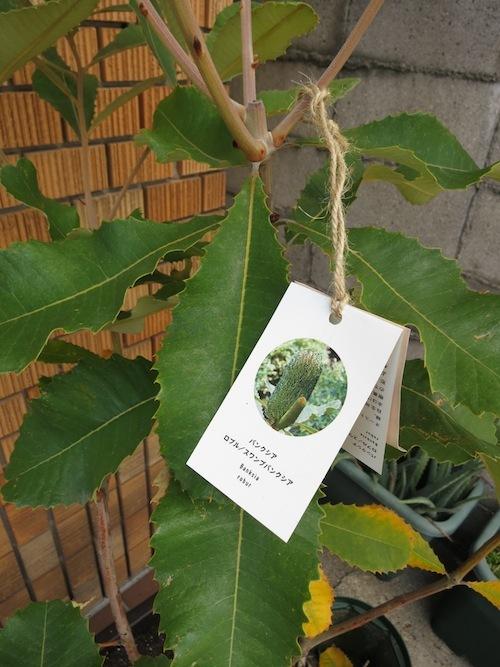 新しい植物_f0324766_13301347.jpg