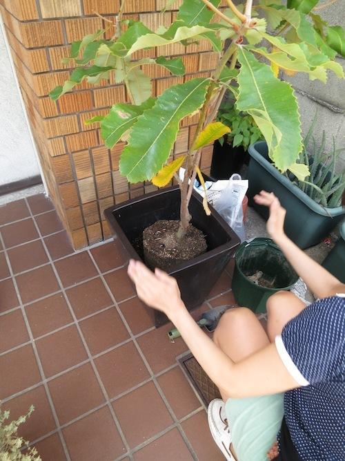 新しい植物_f0324766_13301371.jpg