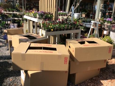 今日は、箱送り苗の到着です_b0137969_10341274.jpg
