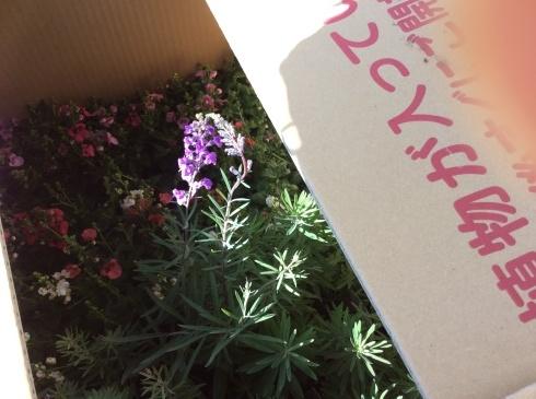 今日は、箱送り苗の到着です_b0137969_10344381.jpg