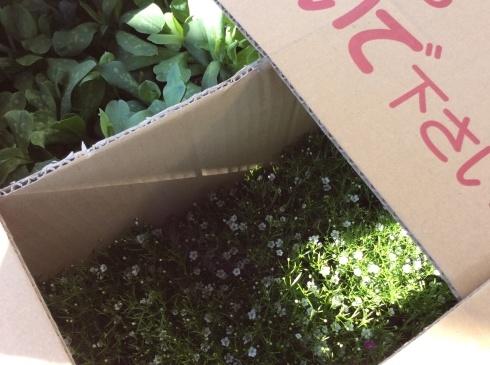 今日は、箱送り苗の到着です_b0137969_10350401.jpg