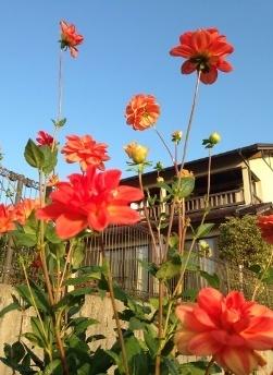 * お知らせ 「秋の感謝祭」 in こころり庵 *_e0290872_08145743.jpg
