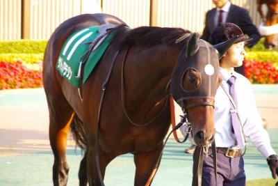 GI馬5頭出走の富士Sは、昨年の2歳王者ダノンプラチナが制す_b0015386_22523244.jpg
