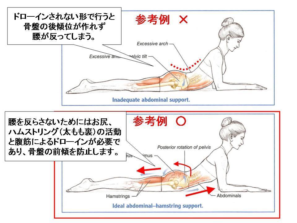 体幹トレーニングの効果的な方法(フロントブリッジ)_c0362789_10273807.jpg