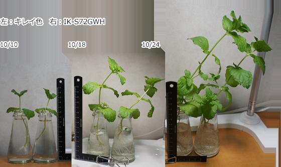 140cc水耕栽培:LED東芝「キレイ色」でハーブは育つか→育った。_a0024690_22551199.png