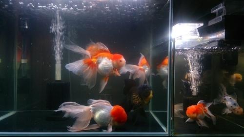 来週は、さいたま養殖魚まつり!_b0298605_02131662.jpg