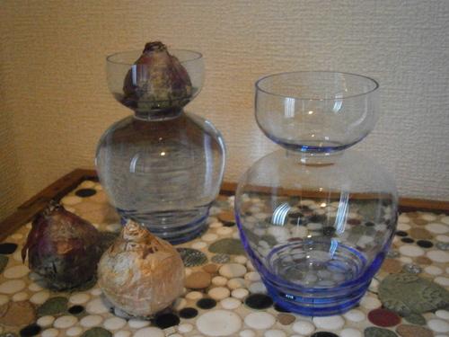 ヒヤシンスの水栽培☆_e0199317_21345331.jpg
