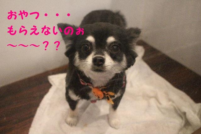 さむ~い!!_b0130018_00132.jpg