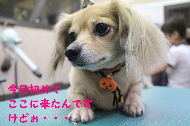 さむ~い!!_b0130018_23361832.jpg
