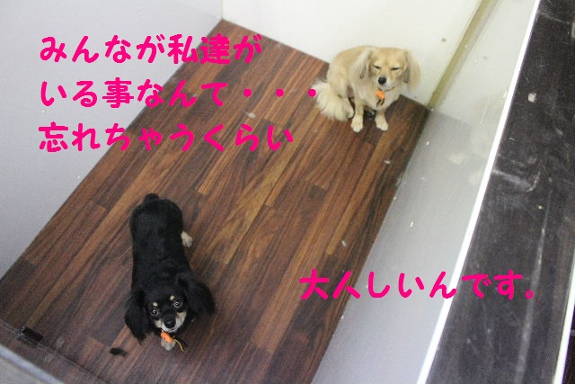 さむ~い!!_b0130018_23364651.jpg