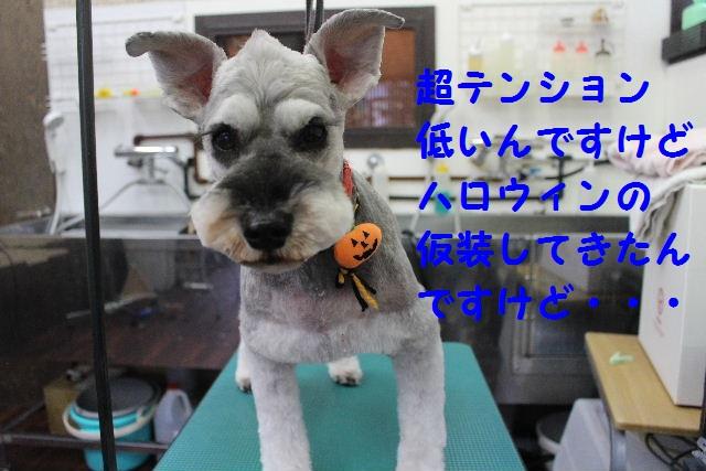 さむ~い!!_b0130018_23392646.jpg