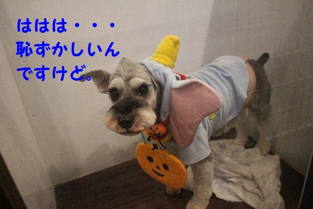 さむ~い!!_b0130018_2340439.jpg