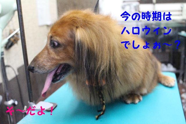 さむ~い!!_b0130018_23414171.jpg