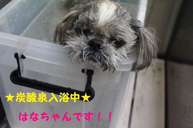 さむ~い!!_b0130018_23424480.jpg