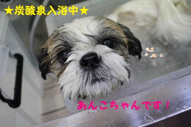 さむ~い!!_b0130018_23442581.jpg