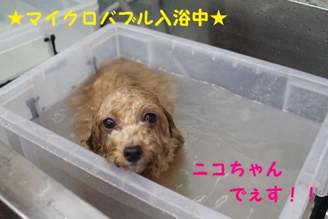さむ~い!!_b0130018_23464284.jpg