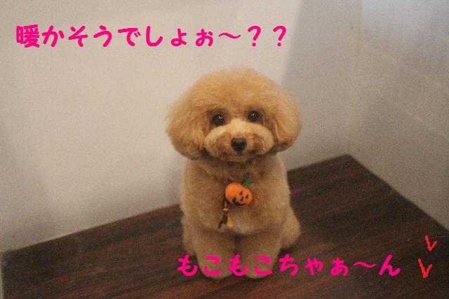 さむ~い!!_b0130018_23484021.jpg