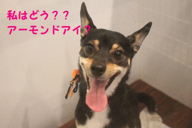 さむ~い!!_b0130018_23532385.jpg