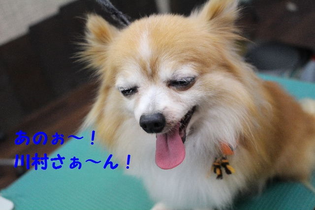 さむ~い!!_b0130018_235802.jpg