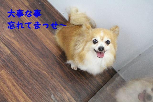 さむ~い!!_b0130018_2358135.jpg