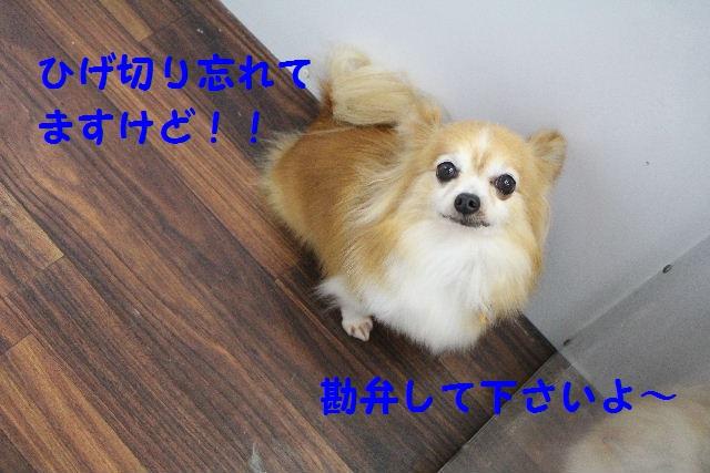 さむ~い!!_b0130018_23582559.jpg