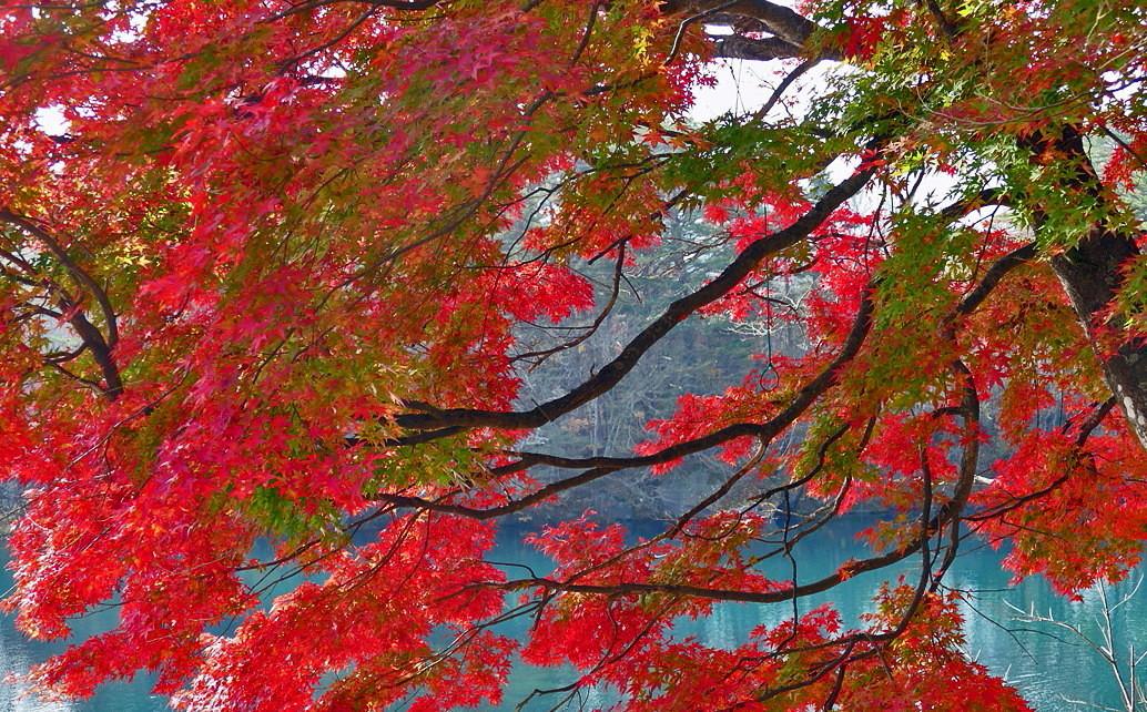 福島県耶麻郡北塩原村 裏磐梯「五色沼自然探勝路」 ①_d0106628_07481234.jpg