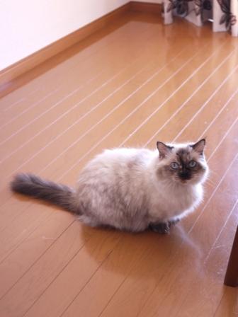 猫のお留守番 マリーちゃん編。_a0143140_22113538.jpg