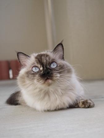 猫のお留守番 マリーちゃん編。_a0143140_22948100.jpg