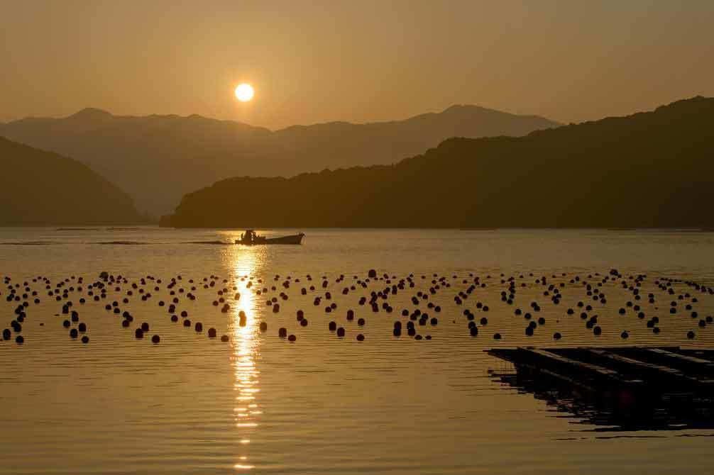 朝の真珠養殖棚_d0238245_13252759.jpg