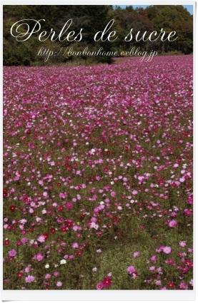 お花畑へ・・・_f0199750_18403928.jpg