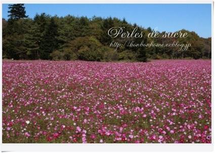 お花畑へ・・・_f0199750_18405391.jpg