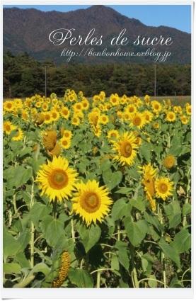 お花畑へ・・・_f0199750_18411329.jpg