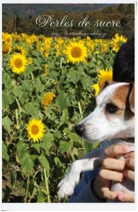 お花畑へ・・・_f0199750_18412408.jpg