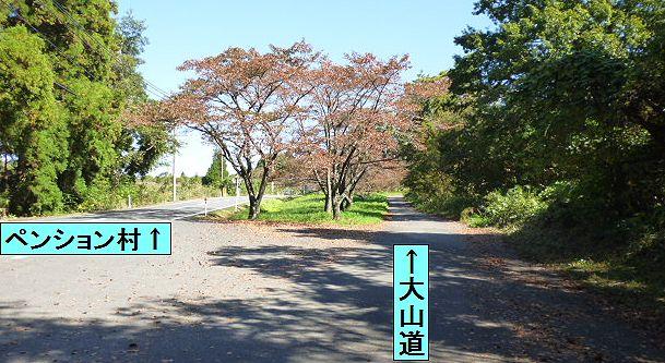 大山道を歩く(溝口道)_b0156456_10104638.jpg